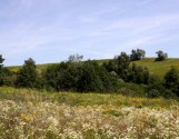 Земельна ділянка по сусідству із Львовом